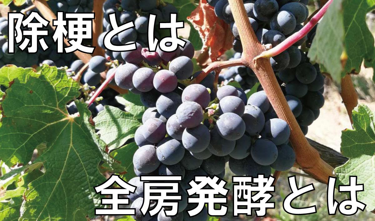 用語解説 『除梗』と『全房発酵』 知ってるとワイン通ぶれるかも!?